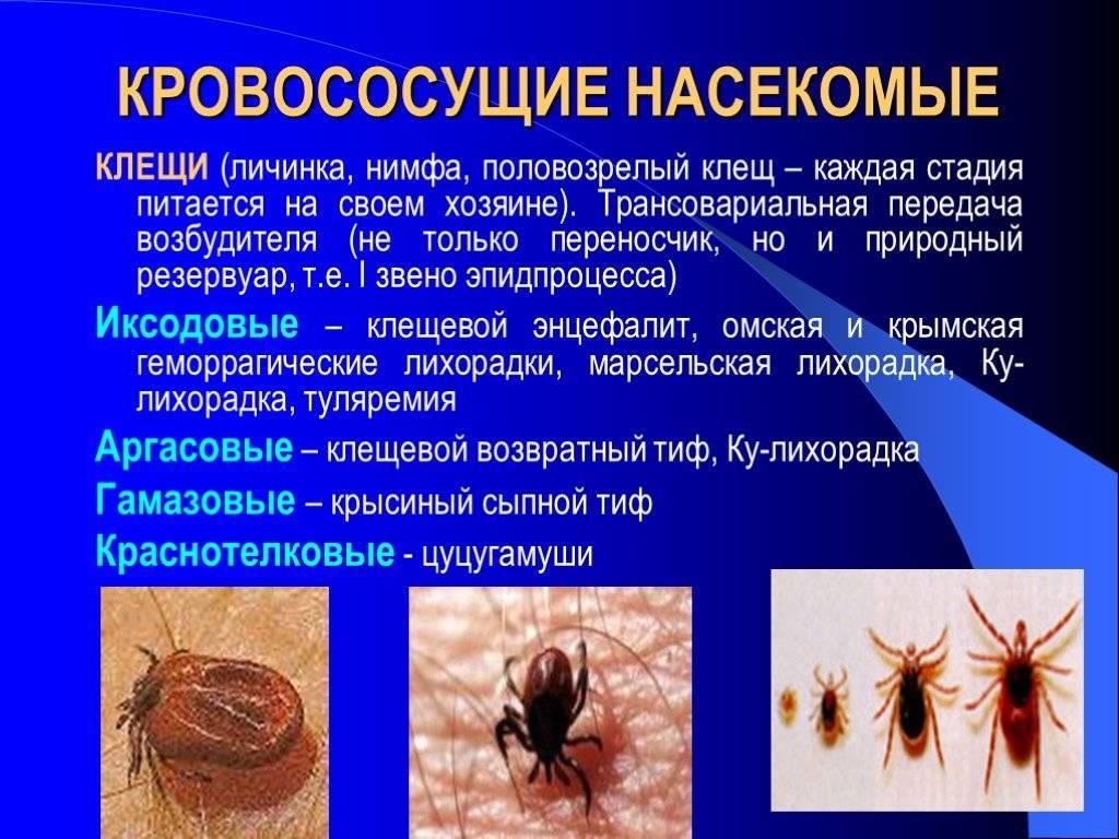 Инфекции, передающиеся при укусах клещей