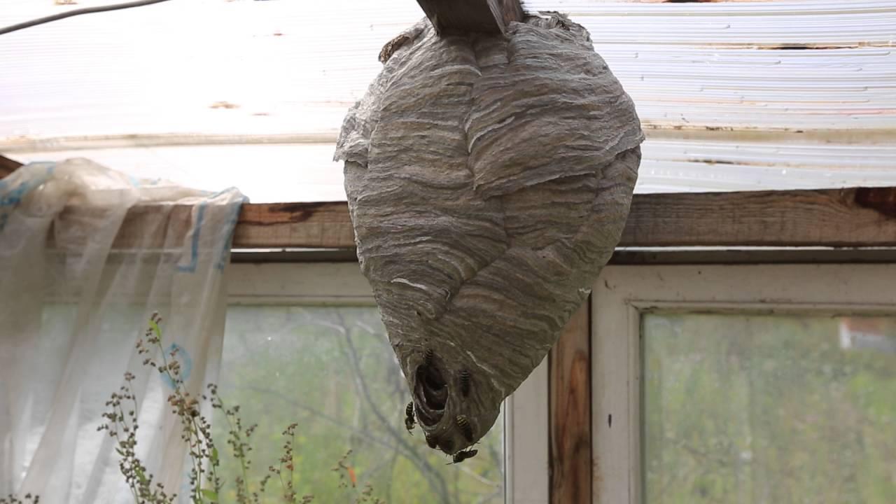 Как избавиться от ос на балконе, способы вывести осиное гнездо своими силами
