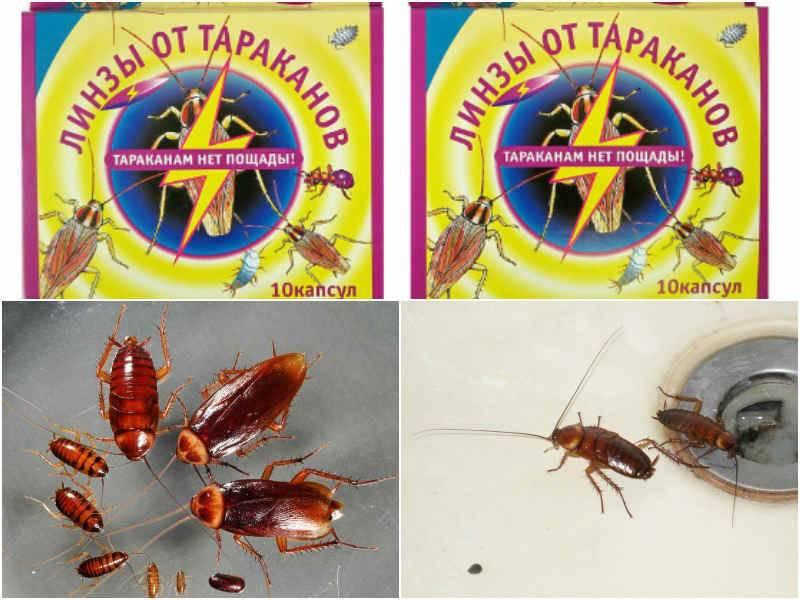 Делиция от тараканов