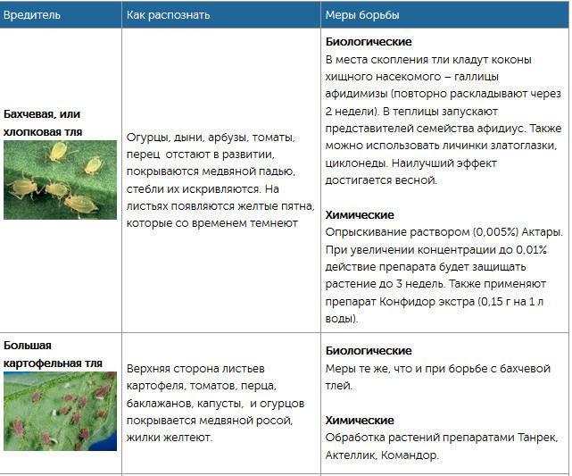 Вредители картофеля и методы борьбы с ними. фото и описание
