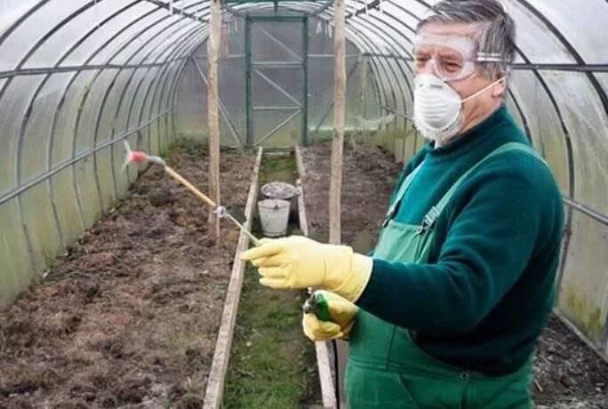 Обработка теплицы от белокрылки весной