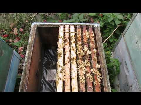 Бипин для пчёл. инструкция по применению, методы обработки, фото и видео
