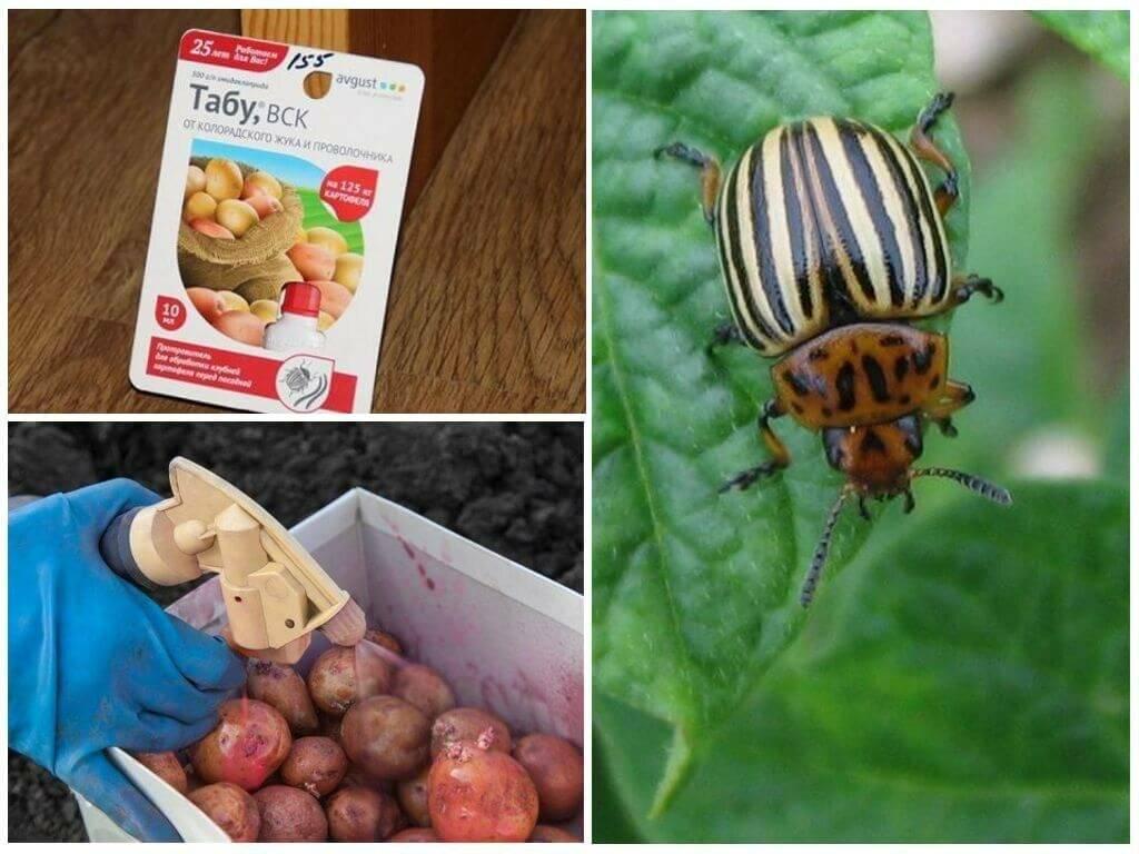 Защита от колорадского жука народными средствами