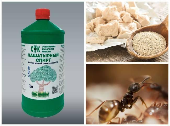Нашатырный спирт от муравьев в квартире - мечети мира