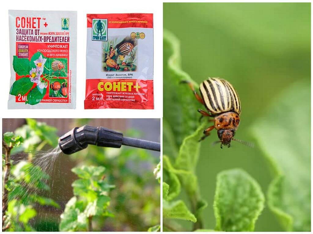 Дегтярное мыло для борьбы с колорадским жуком: преимущества и способ применения