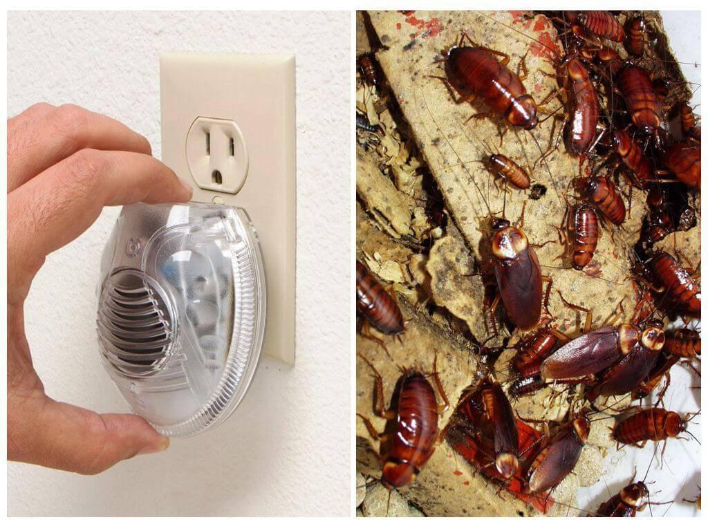 Чего боятся тараканы в квартире - естественные враги, подручные средства, неблагоприятные условия для тараканов, инструкция как обезопасить своё жильё