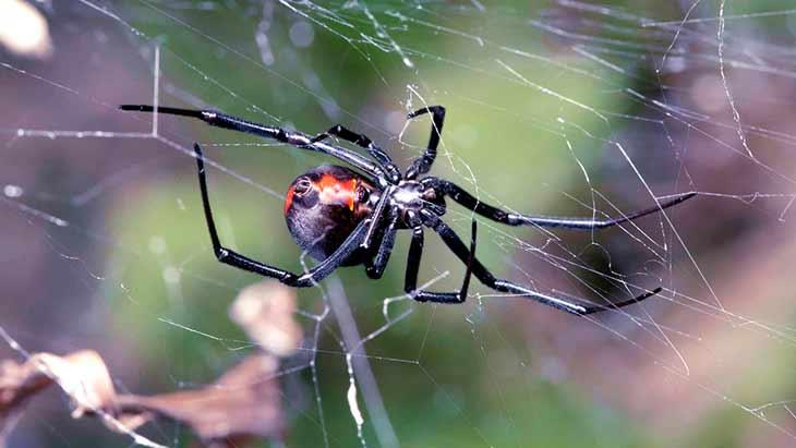 Топ-7 самых опасных пауков в мире