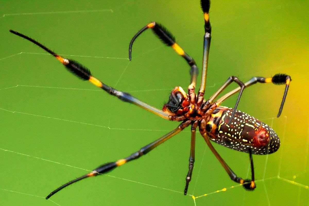 Чем питаются пауки в квартире и в доме