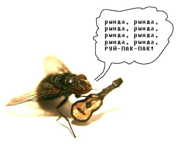 Как убить муху: советы и способы борьбы в квартире и доме / как избавится от насекомых в квартире