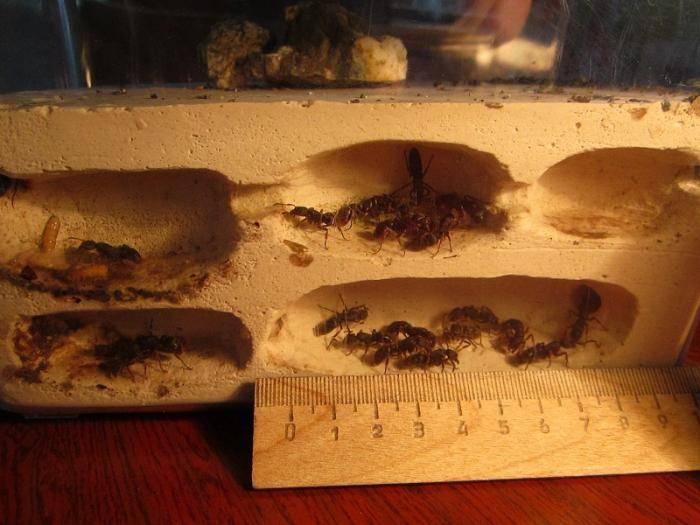 Грызут ли мыши пеноплекс — как предотвратить порчу утеплителя и каковы его особенности. грызут ли мыши пеноплекс: что делать, как защитить его от мышей?