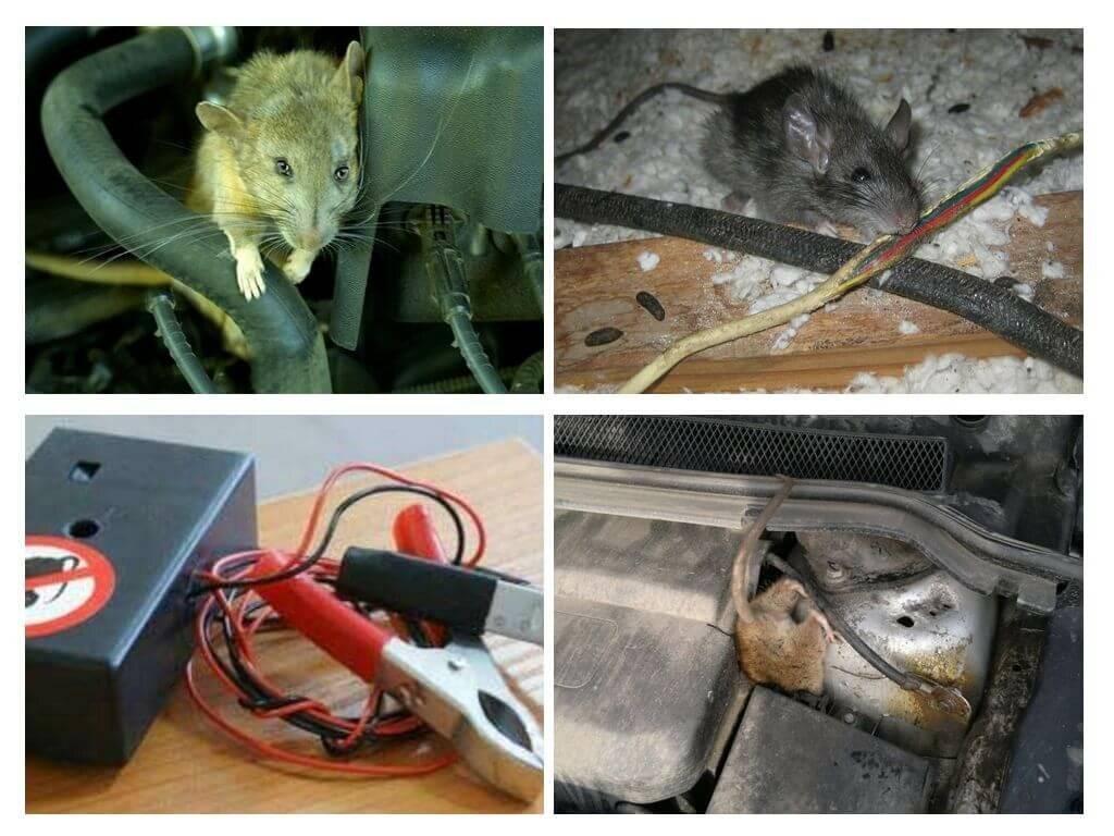 Как можно избавиться от запаха мышей в доме, квартире самостоятельно / vantazer.ru – информационный портал о ремонте, отделке и обустройстве ванных комнат