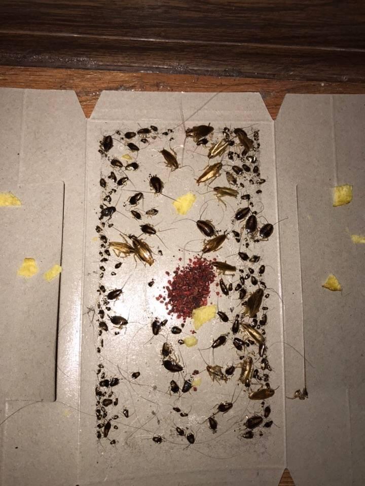 Как найти гнездо тараканов в квартире
