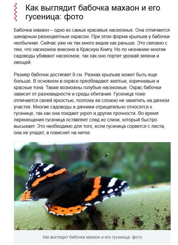 Бабочка махаон | мир животных и растений
