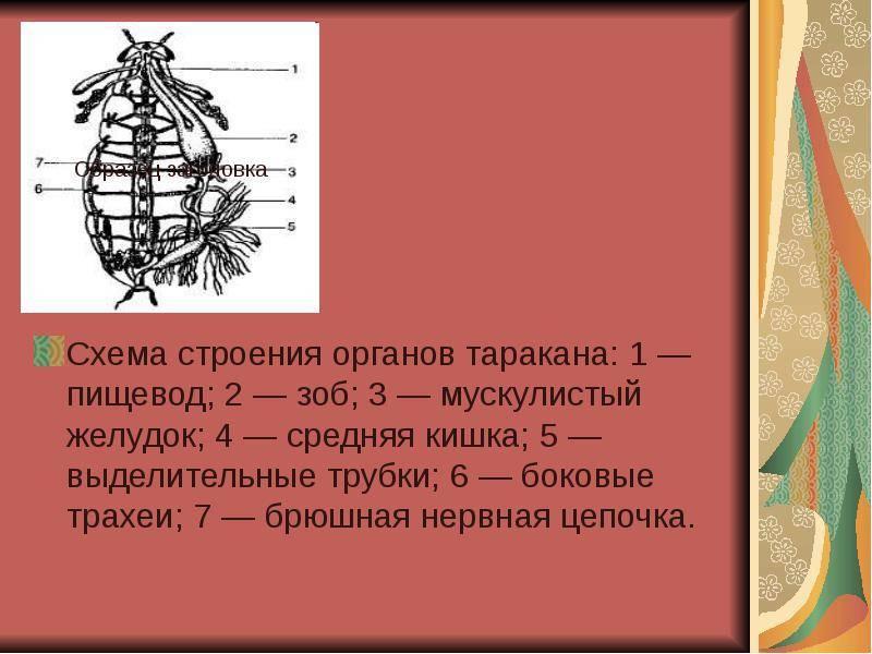 Ученые раскрыли антигравитационный секрет тараканов: наука и техника: lenta.ru