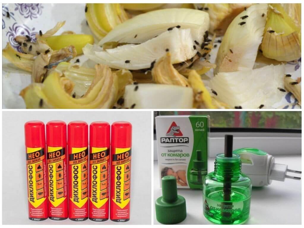 Как избавиться от фруктовых мошек в квартире и в доме: действенные народные средства и магазинная химия