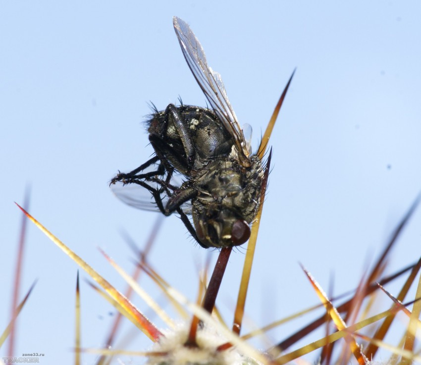 Как избавится от мух в квартире? как поймать муху? простые ловушки для избавления от мух и мушек
