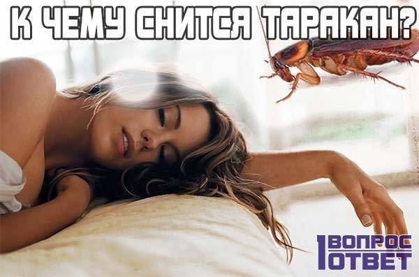 К чему снятся тараканы - значение сна тараканы по соннику