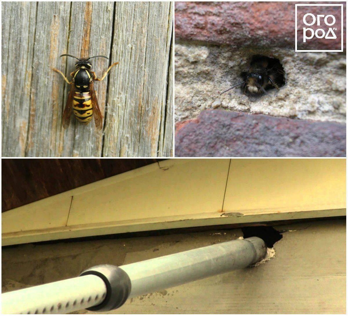 Как избавиться от осиного гнезда на балконе