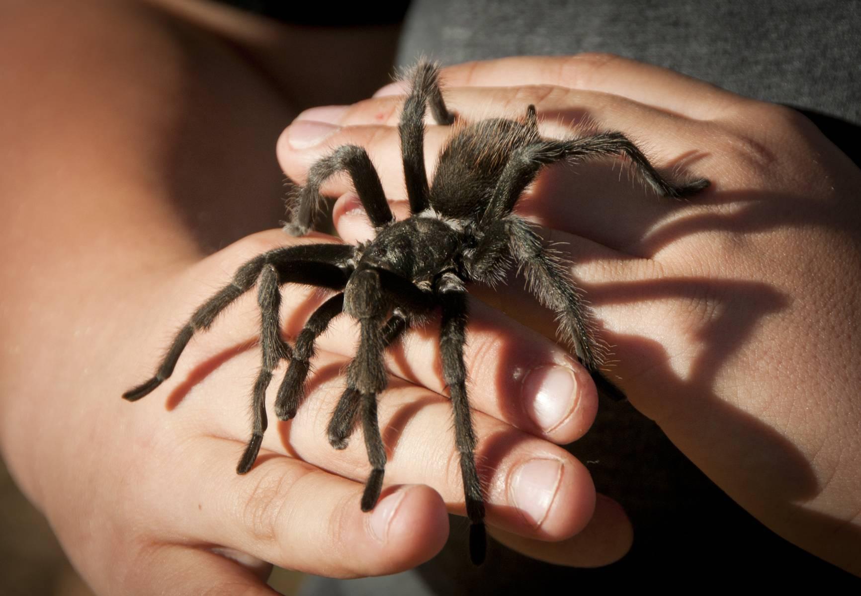 Арахнофобия (боязнь пауков): как избавиться от страха
