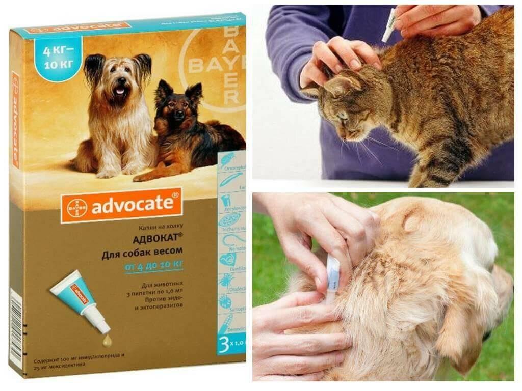 """""""адвокат"""" от блох для кошек и собак: отзывы, цена, инструкция"""