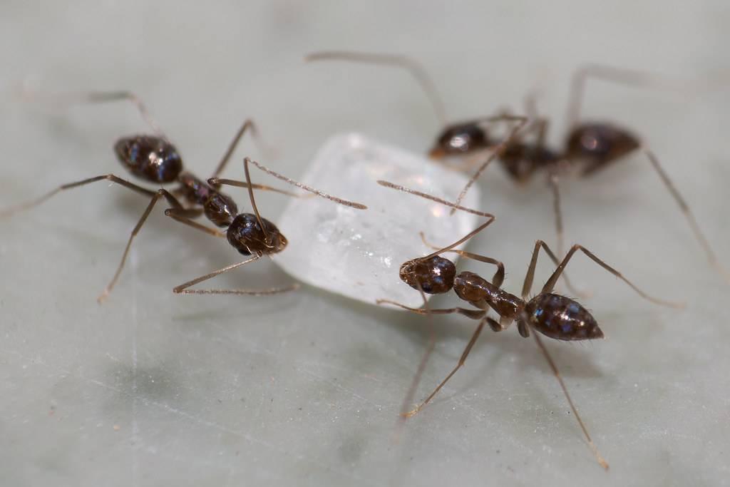 «муравьи к чему снятся во сне? если видишь во сне муравьи, что значит?»