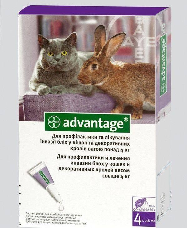 Блохи у кроликов и что с ними делать