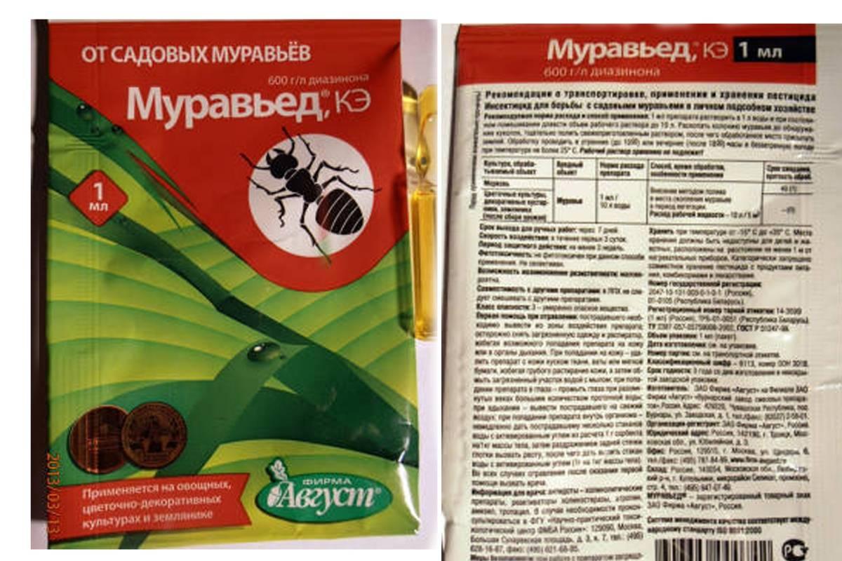 Эффективные средства от домашних муравьев в квартире: виды, применение, народные рецепты