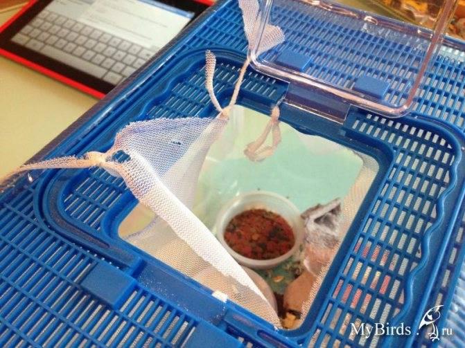 Основные правила разведения сверчков в домашних условиях. чем питаются насекомые сверчки