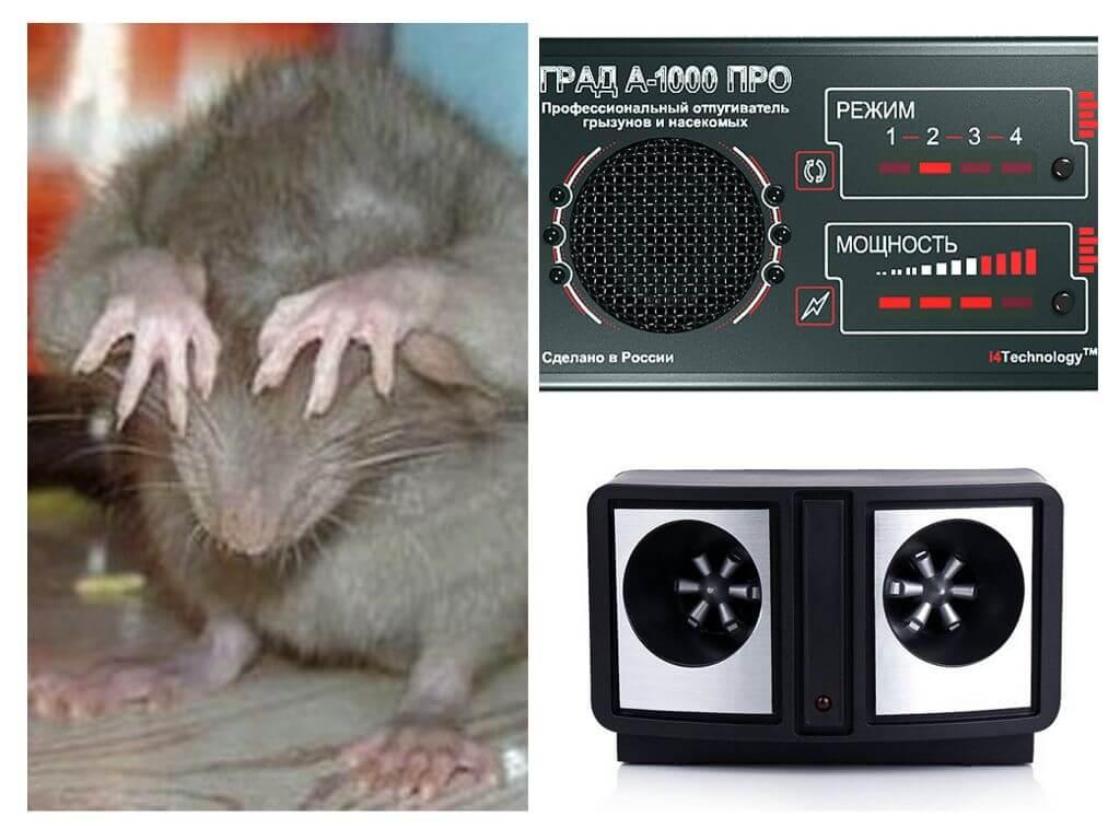 Что больше всего пугает мышей: запахи (растений, шерсти), звуки и яркий свет