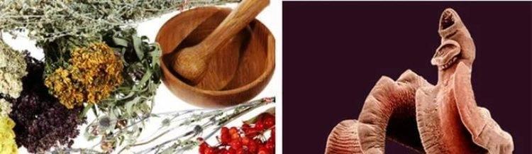 Народные средства от глистов у взрослых, детей. травы от паразитов