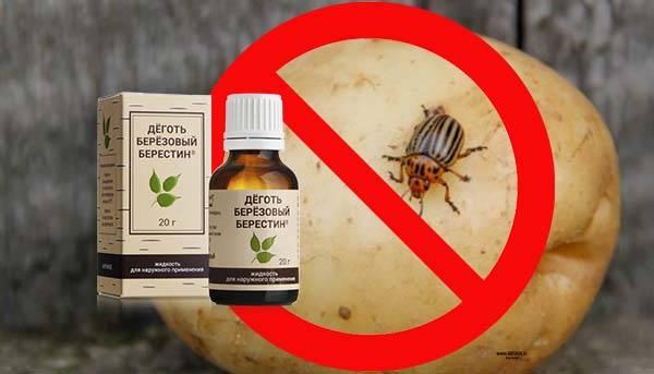 Горчица от колорадского жука – спасаем картошку народными методами
