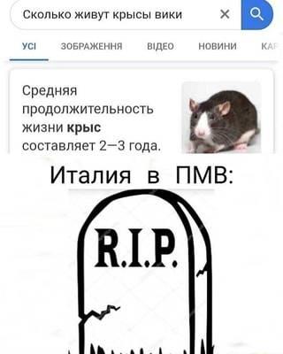 Сколько живут крысы  в домашних условиях, срок жизни декоративных крыс