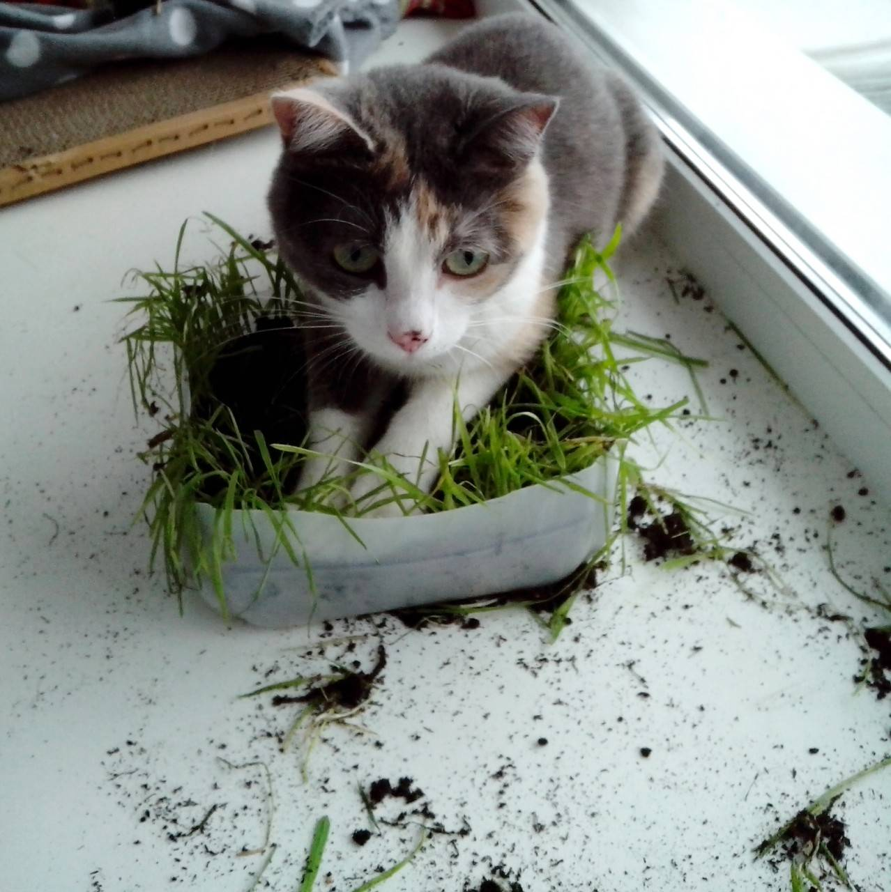 Ветеринар рассказал, почему кошки едят пакеты и какая порода самая умная