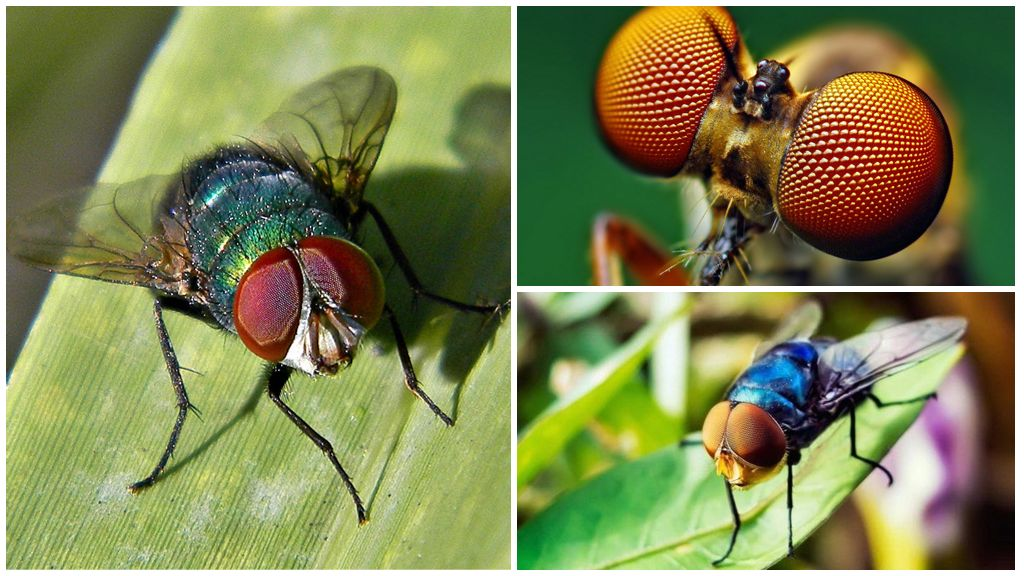 Сколько живут мухи и другие интересные факты