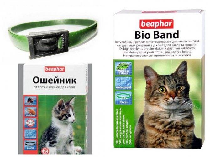 Какие капли от блох для кошек лучше