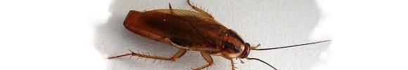 К чему снится насекомые. видеть во сне насекомые - сонник дома солнца