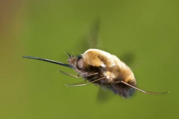 Жужелица насекомое. описание, особенности, виды, образ жизни и среда обитания жужелицы | живность.ру