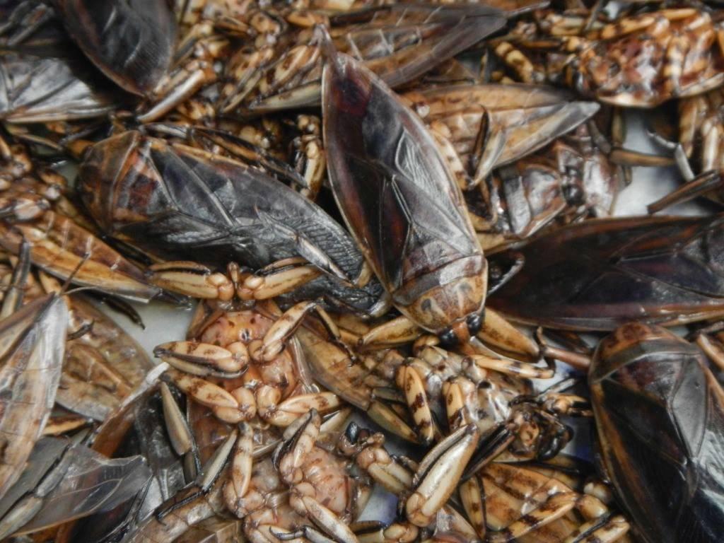 Домашняя сколопендра: опасна ли для человека, как выглядит, как избавиться