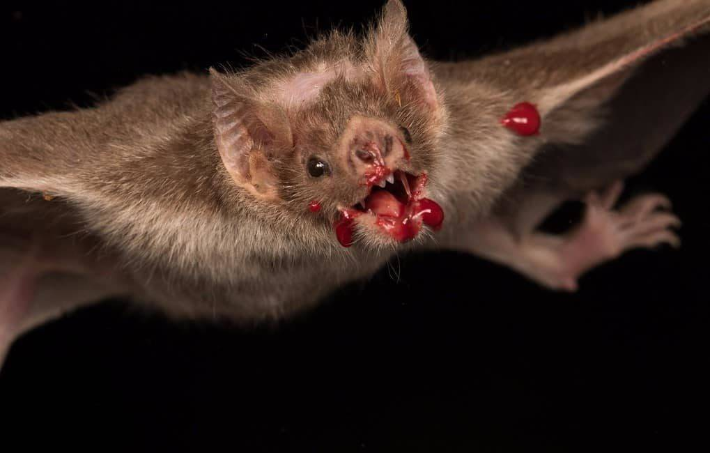 Опасна ли летучая мышь для человека: кусается ли, что будет если она нападёт