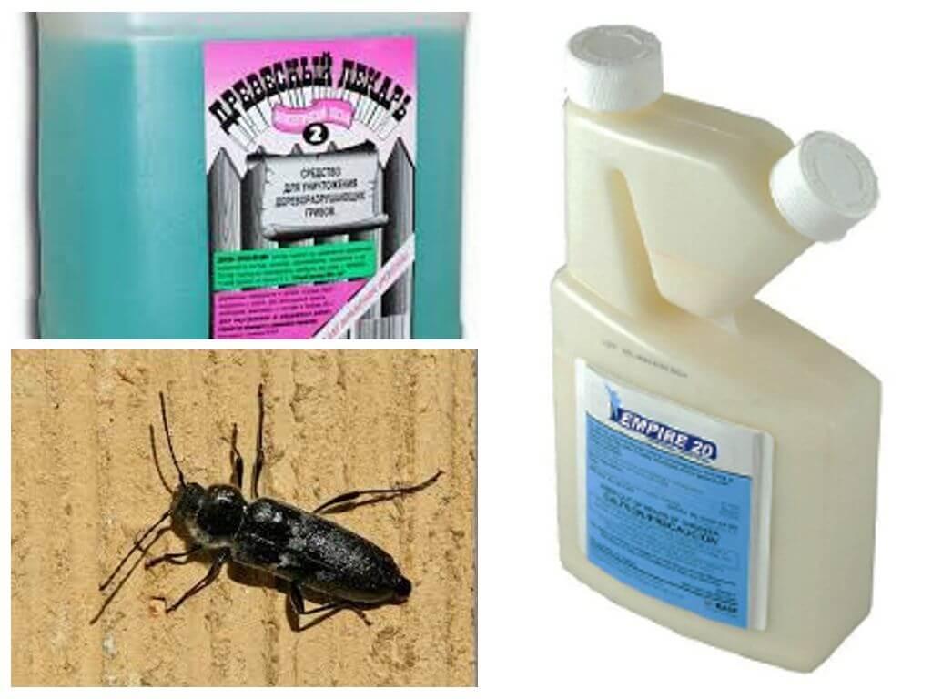 Жук точильщик: как избавиться от жука в доме или квартире, основные методы