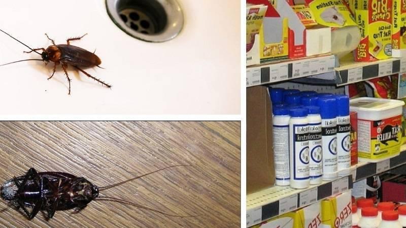 Сеноеды в квартире: как избавиться от них в домашних условиях