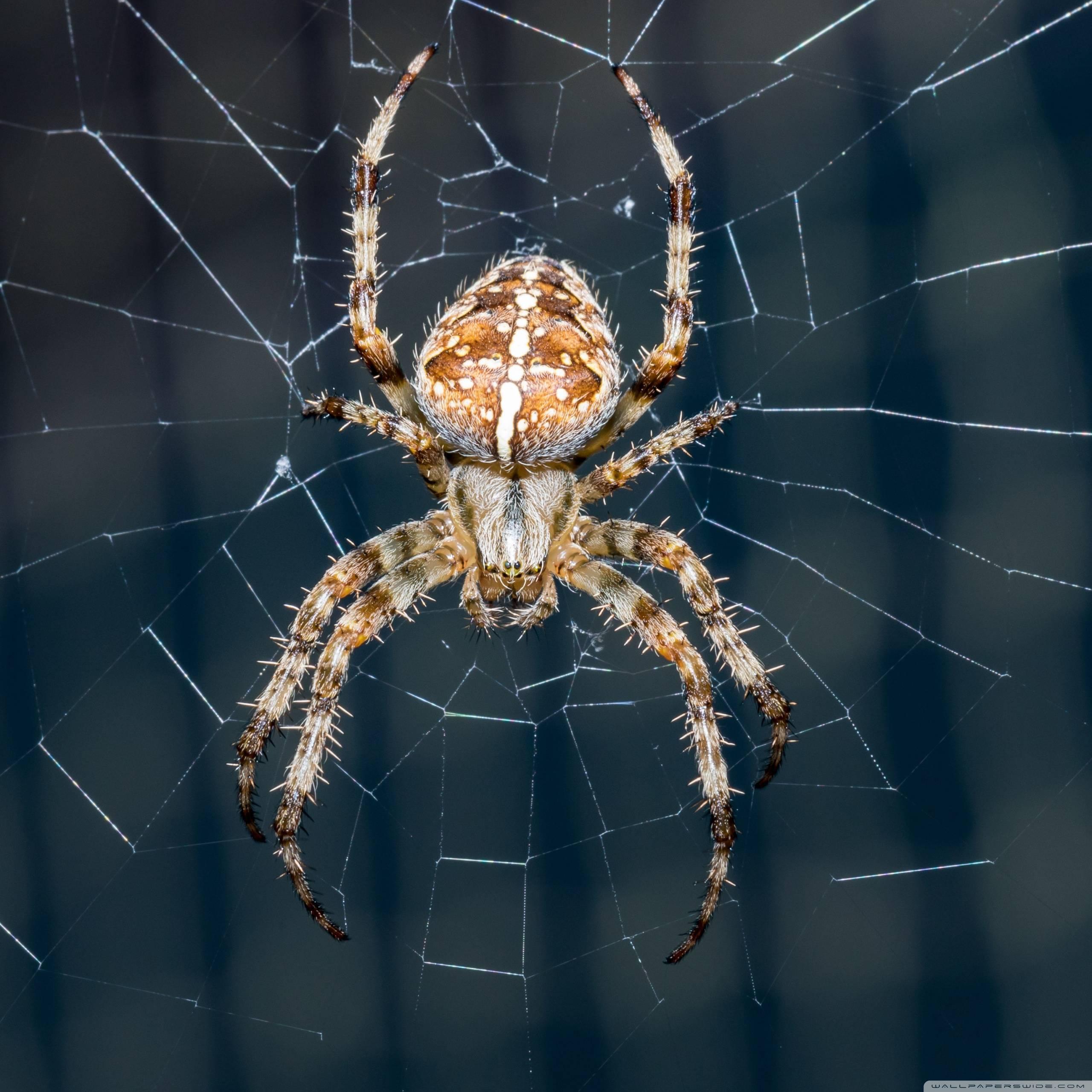 Интересные факты о пауке-крестовике, его строении, внешний вид и уровень ядовитости укуса