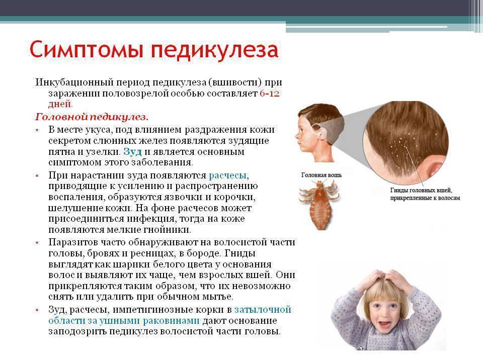 Педикулез: что это такое, причины, симптомы, лечение, профилактика