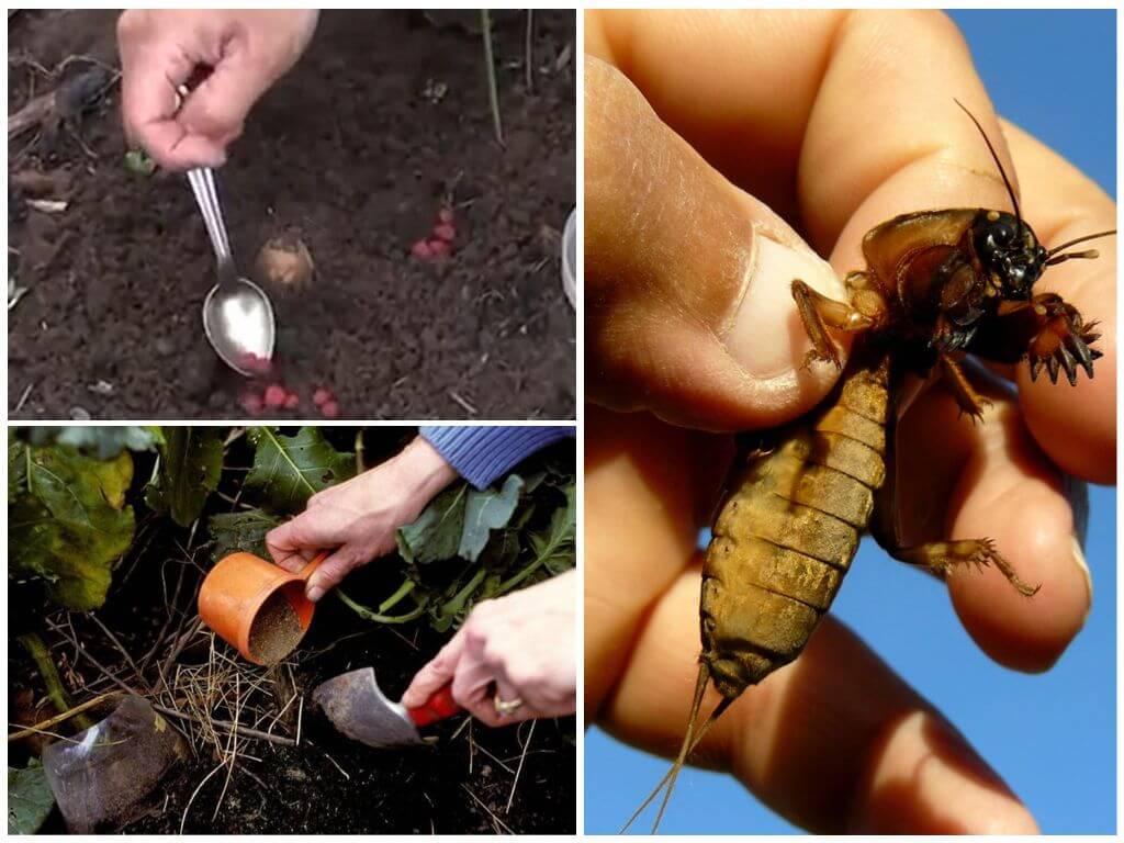 Избавление от медведки в огороде навсегда: 30 методов