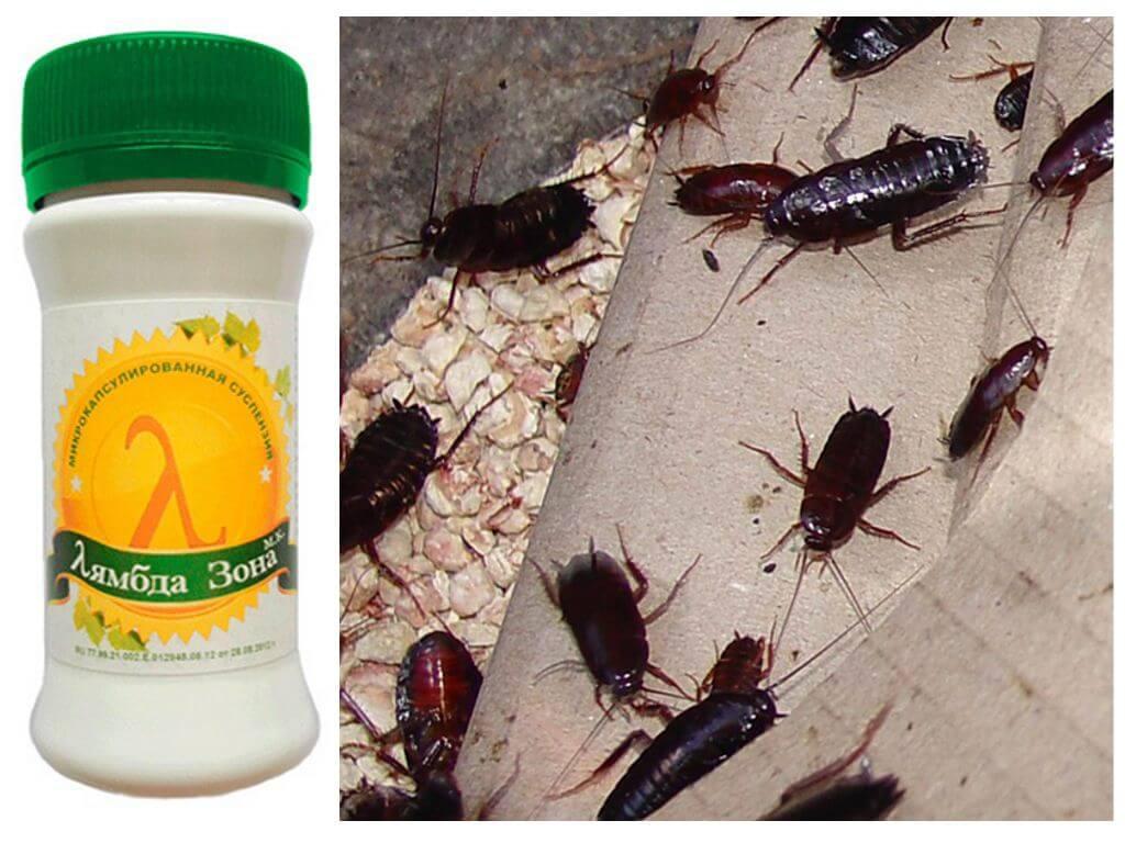 Средства раптор от тараканов