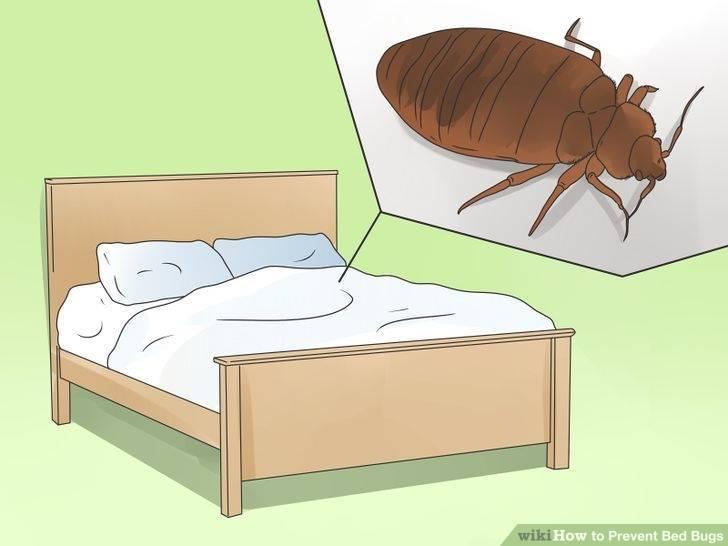 Причины появления постельных клопов в квартире