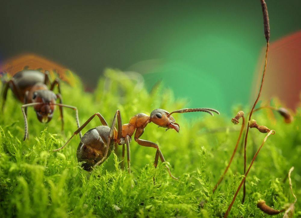 Сколько живет муравей: продолжительность жизни муравьев в доме и дикой природе
