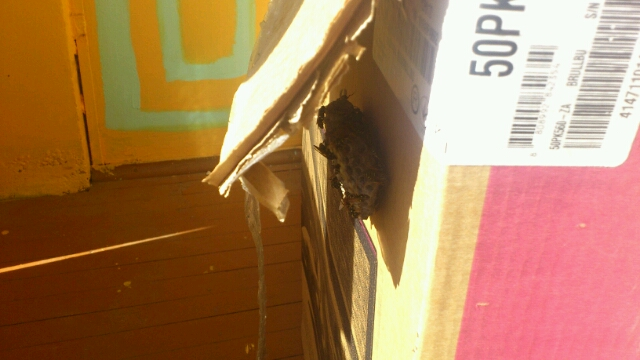 Как избавиться от осиного гнезда в доме и на даче: химические средства, народные способы борьбы, механический метод