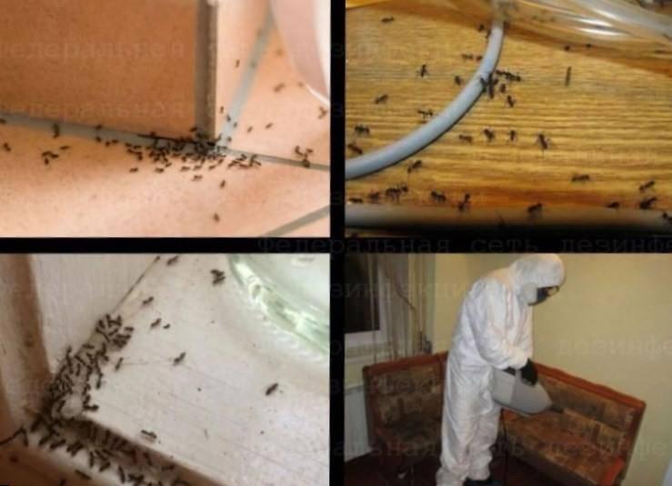 Как избавиться от муравьев в бане: народными и химическими средствами