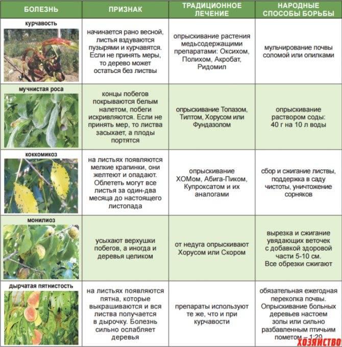 Тля на яблоне: чем можно опрыскивать дерево до и после цветения без вреда для урожая